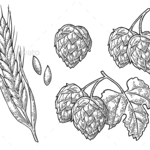 Set Hop Herb Plants with Leaf and Ear of Wheat