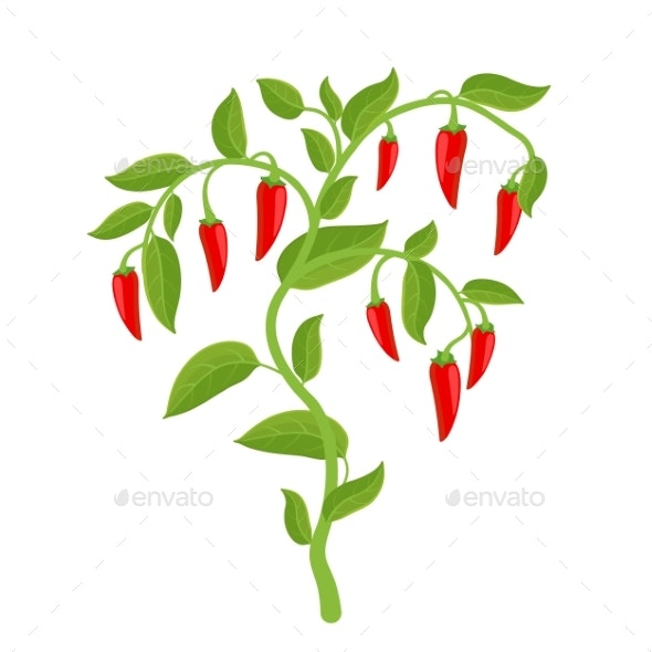 Spicy Chili Pepper Vegetable Bush Plant - Flowers & Plants Nature