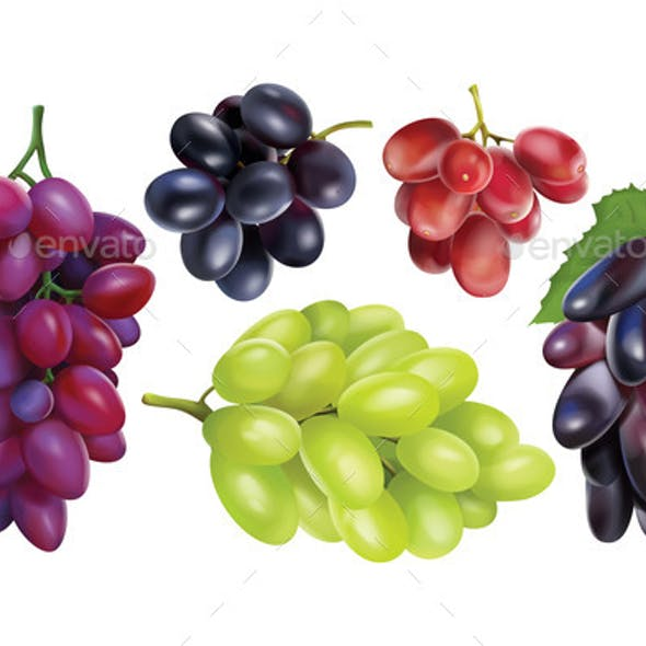 Realisitc Grapes Set Collection