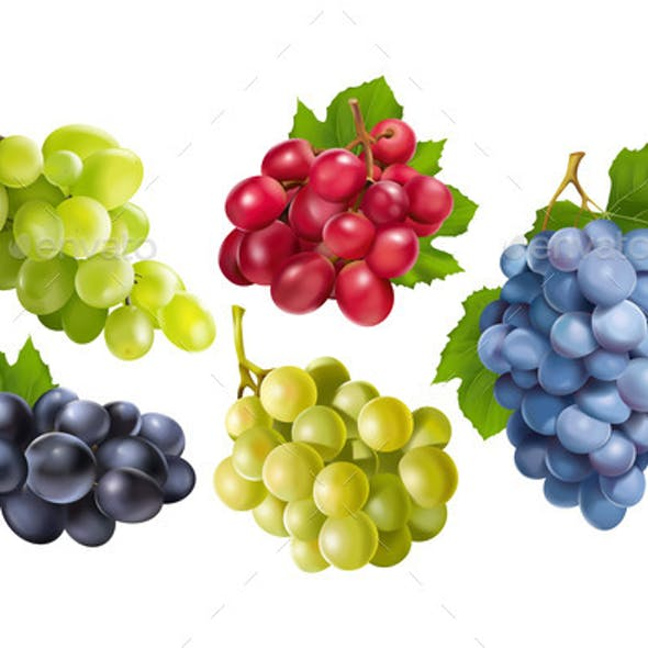 Realistic Grapes Set Print Collection