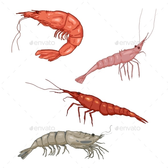 Vector Cartoon Shrimps and Prawns - Food Objects