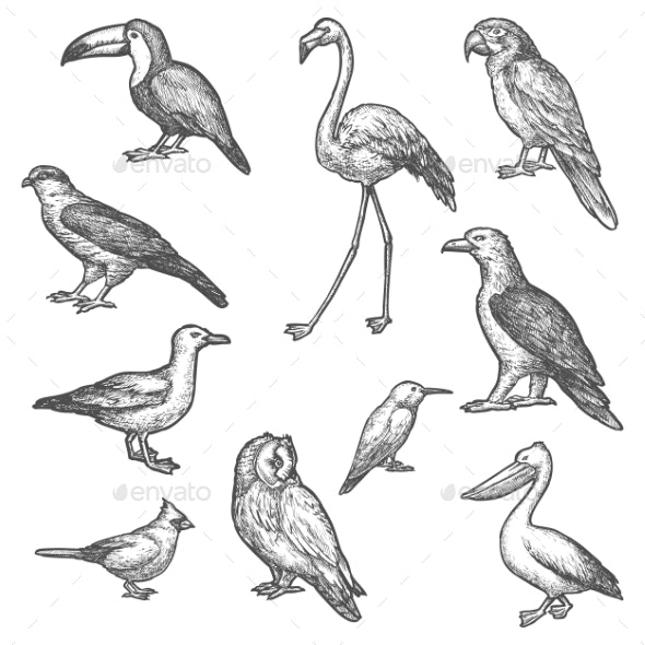 Set of Isolated Bird Wildlife Sketches - Animals Characters