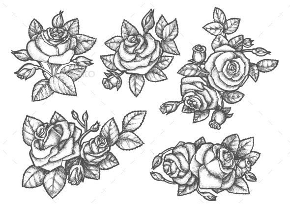 Sketches of Rose Bouquet or Hand Drawn Flowers - Flowers & Plants Nature