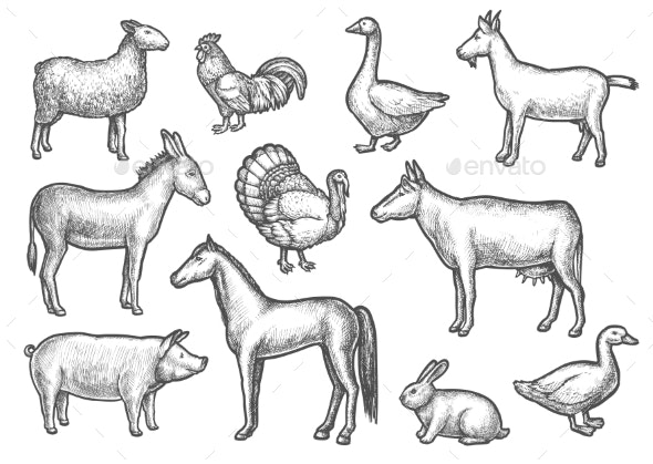 Set of Isolated Domestic Bird and Animal Sketch - Animals Characters