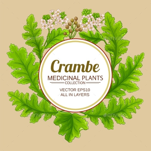 Crambe Plant Vector Frame - Flowers & Plants Nature