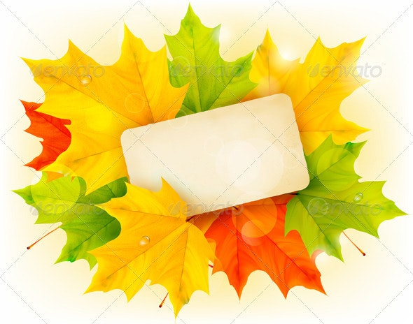 Autumn background with color leaves and card.  - Flowers & Plants Nature