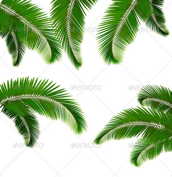 Set of palm leaves on white background - Flowers & Plants Nature