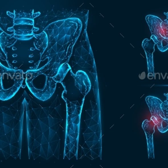 Bones of the Pelvis and Hip Human Anatomy