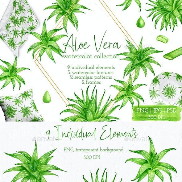 Aloe Vera Clipart. Watercolor Succulent Collection