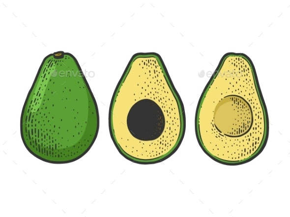 Avocado Berry Vegetable Sketch Vector Illustration - Food Objects