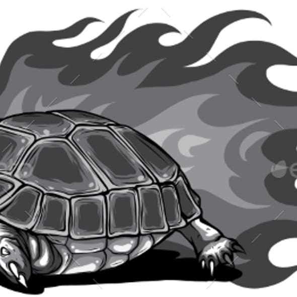 Monochromatic Turtle Isolated on White Background