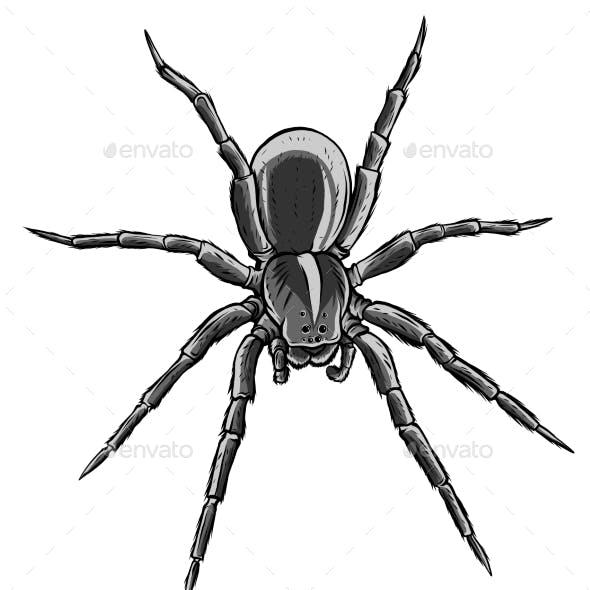 Monochromatic Cute Spider Cartoon Vector