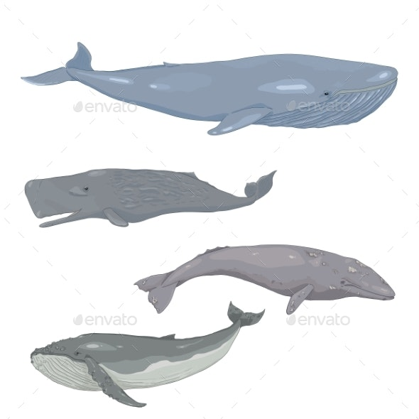 Vector Set of Cartoon Whales - Animals Characters