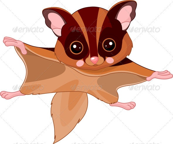 Fun zoo. Flying squirrel - Animals Characters