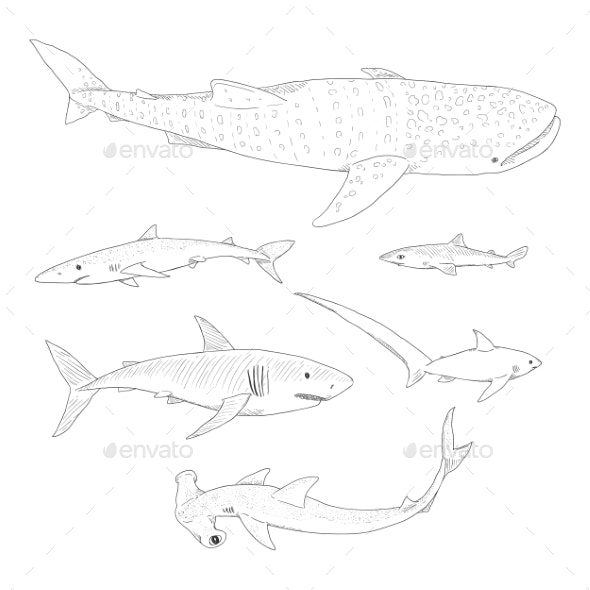 Vector Set of Sketch Sharks - Animals Characters