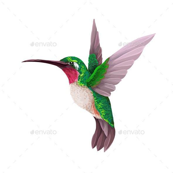 Hummingbirds Isolated