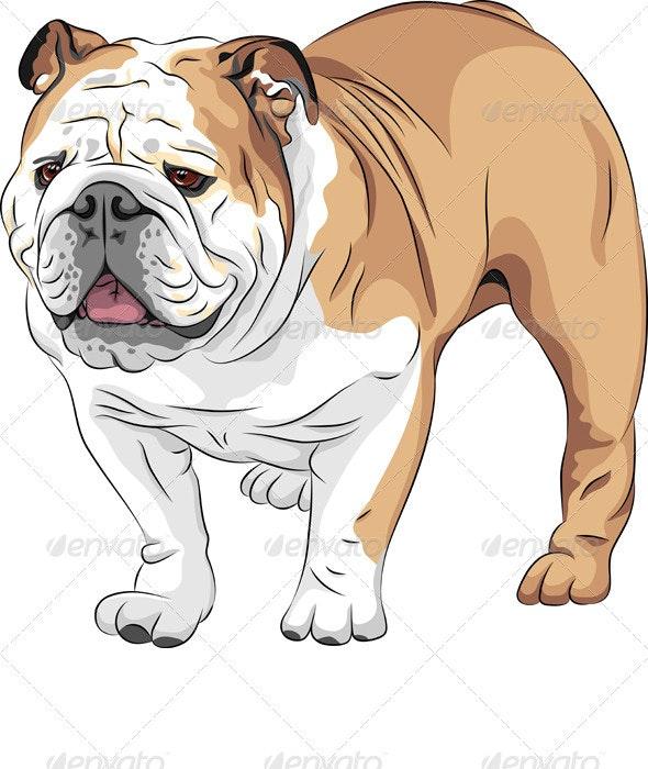 Vector Sketch Dog English Bulldog Breed - Animals Characters