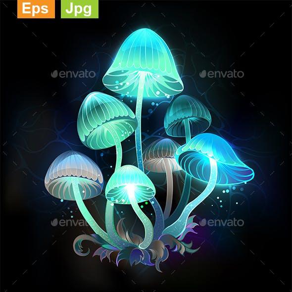 Glowing Blue Toadstools