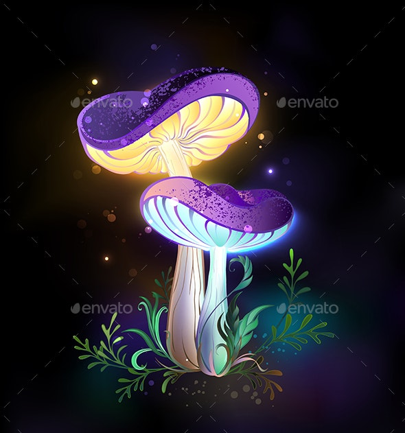 Two Glowing Mushrooms - Flowers & Plants Nature