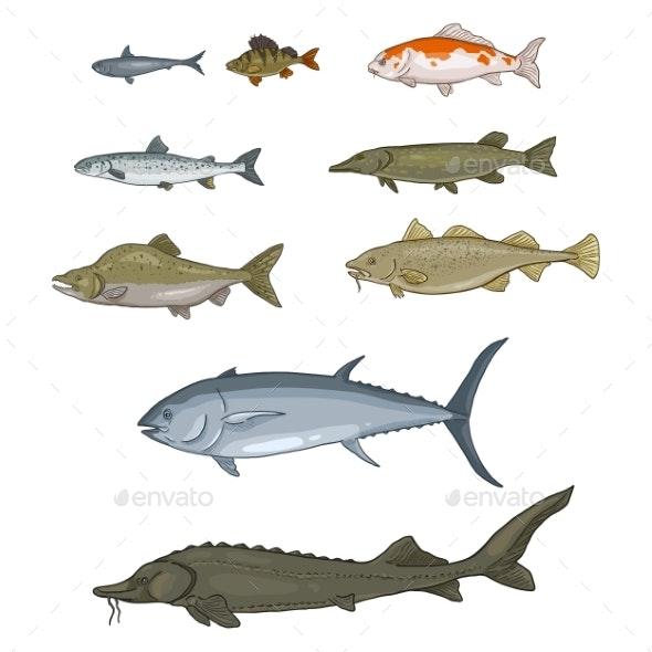 Vector Set of Cartoon Fish - Animals Characters