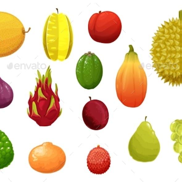 Ripe and Fresh Exotic Fruits Cartoon Vector Set