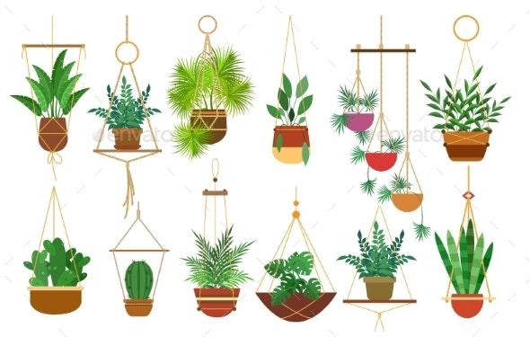 Hanging Pots Plants - Flowers & Plants Nature