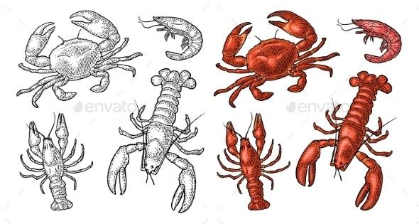Set Sea Animal Crustacean - Animals Characters