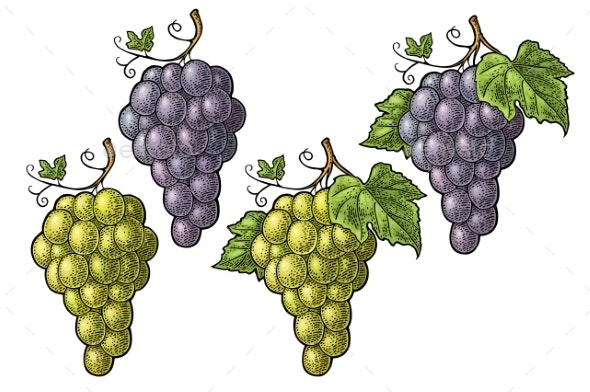 Bunch of Grapes with Berry and Leaves - Flowers & Plants Nature