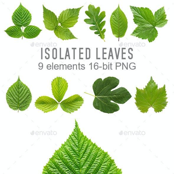 Isolated green leaves