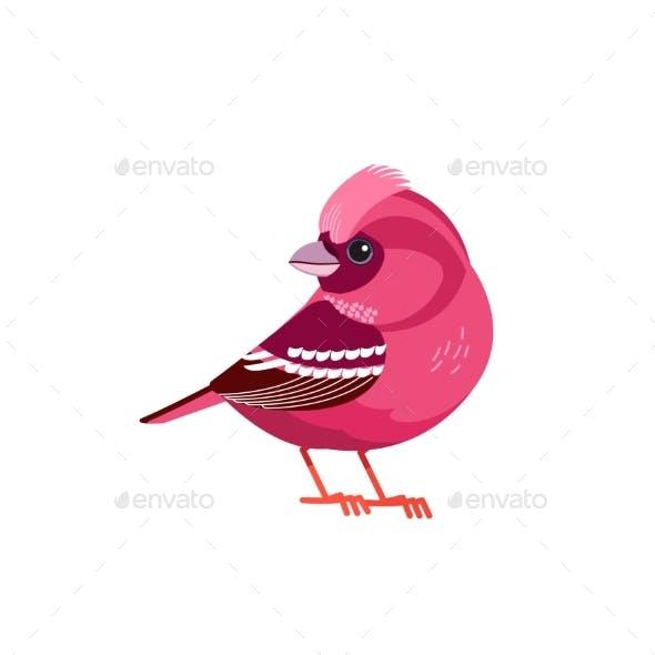 Rosefinch Bird or Purple Finch is a Bird in the
