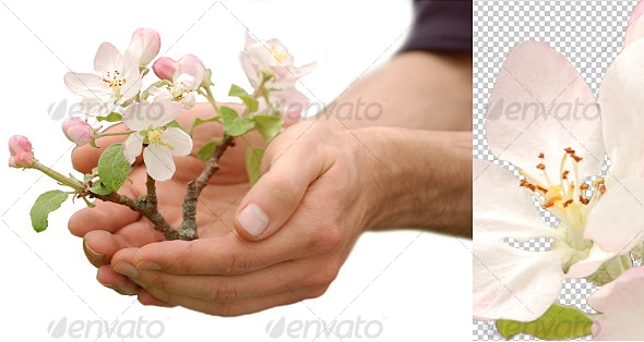 Tree in Palm of Hand - Nature & Animals Isolated Objects