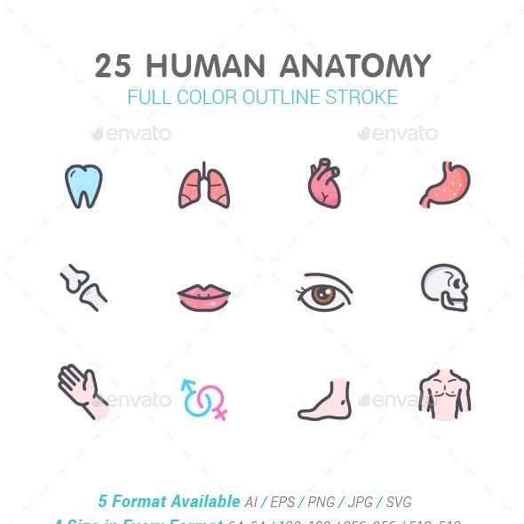 Human Anatomy Color Icon