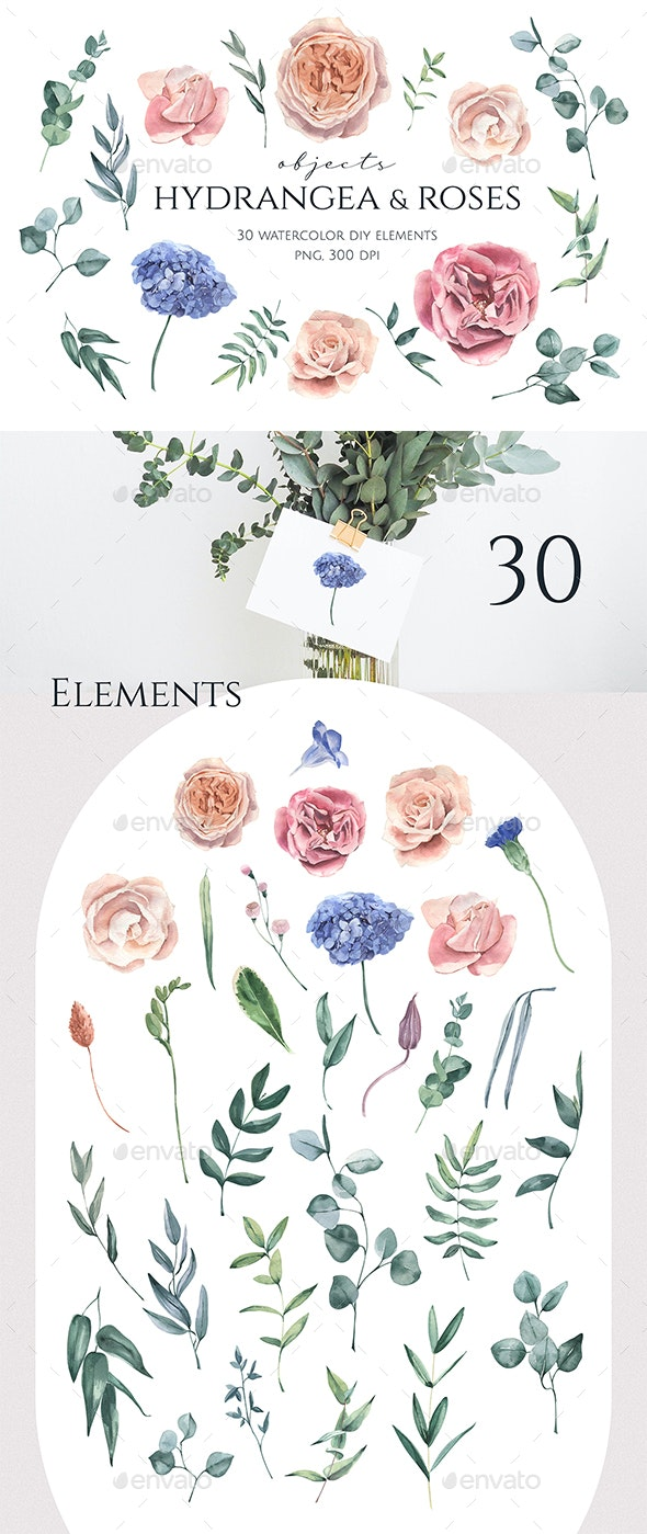 Hydrangea and Roses Watercolor Elements - Objects Illustrations