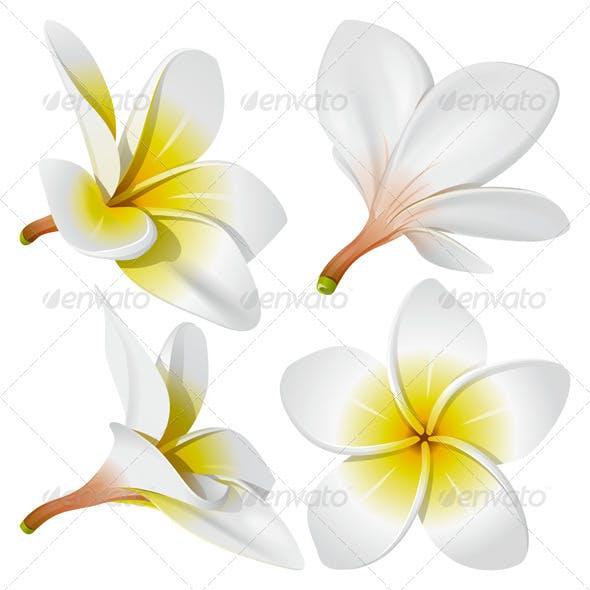 Hawaiian necklace flowers