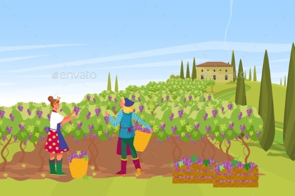 Plantation French Provence Wine Production Farmer - People Characters