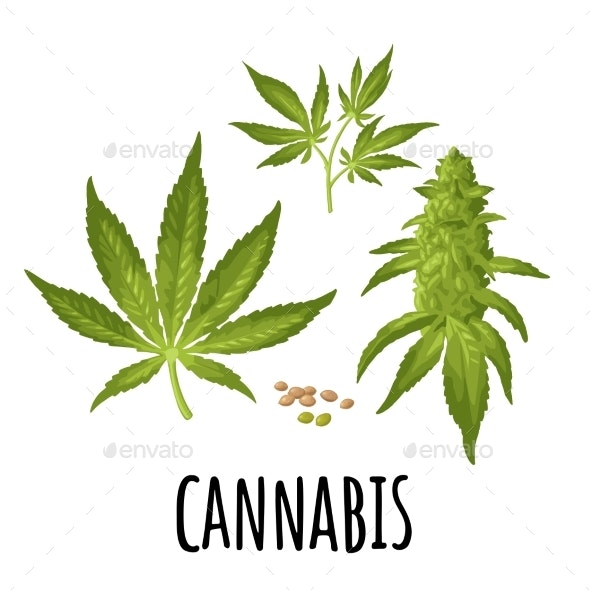 Marijuana Mature Plant with Leaves and Buds - Flowers & Plants Nature