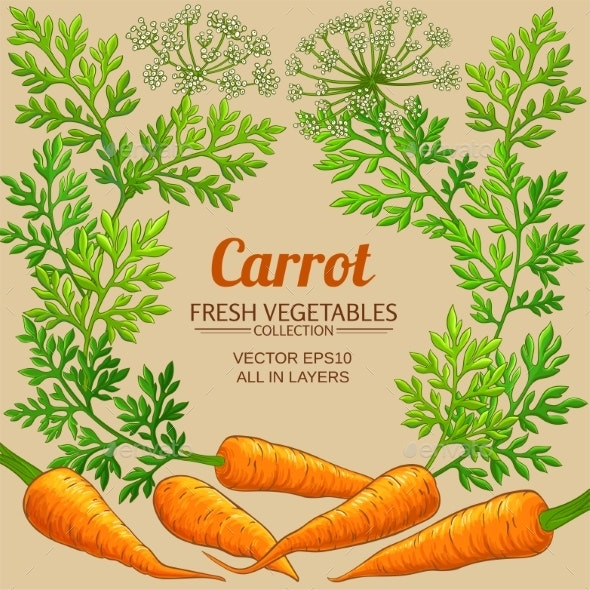 Carrot Frame on Color Background - Food Objects