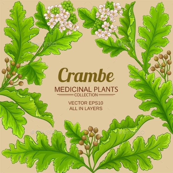 Crambe Plant Frame on Color Background - Flowers & Plants Nature