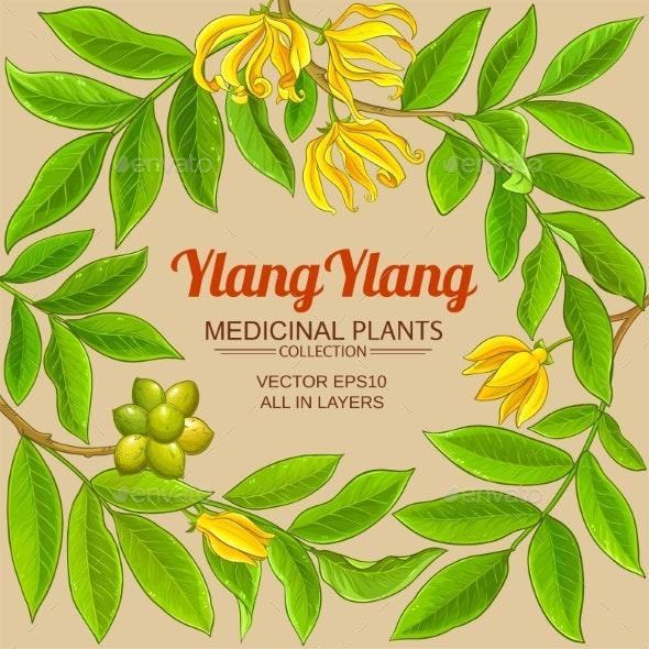 Ylang Ylang Frame on Color Background - Flowers & Plants Nature