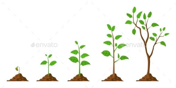 Tree Grow - Flowers & Plants Nature