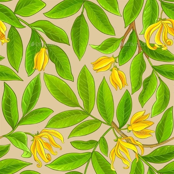 Ylang Ylang Pattern on Color Background - Flowers & Plants Nature