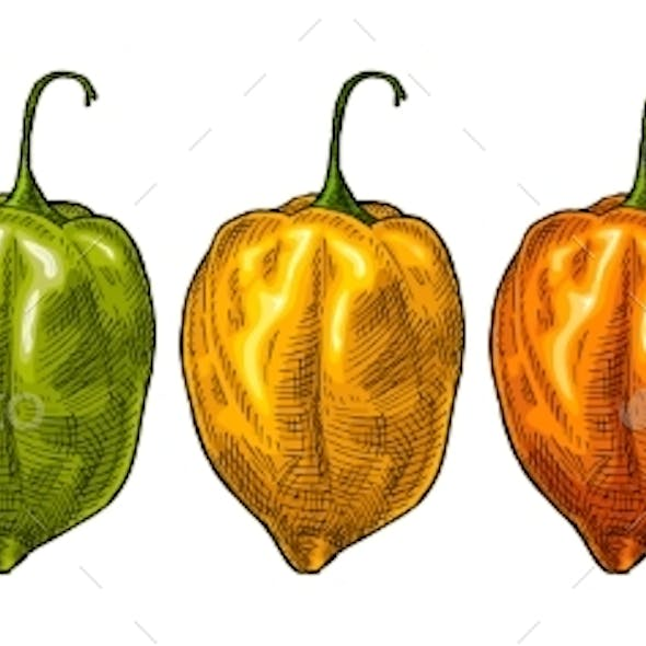 Whole Red Green Yellow Pepper Habanero