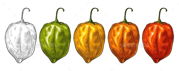 Whole Red Green Yellow Pepper Habanero - Food Objects