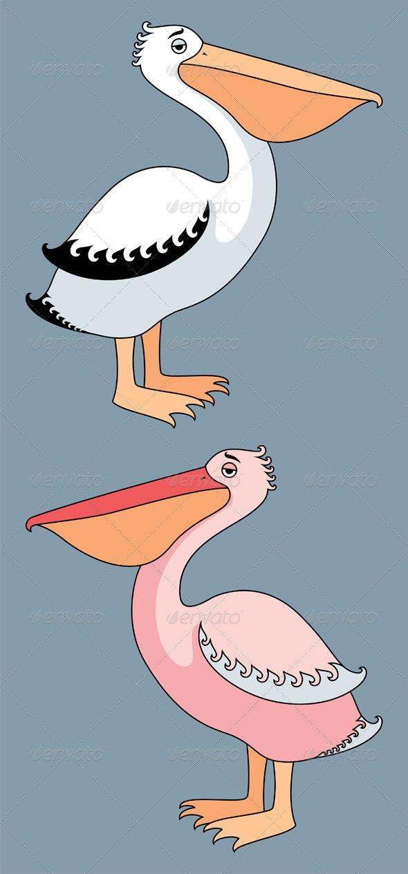 Pelicans - Animals Characters