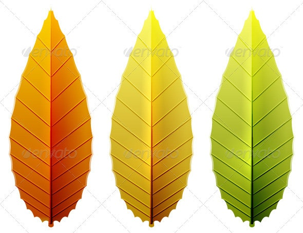 Seasonal Leaves Pack - Nature Conceptual