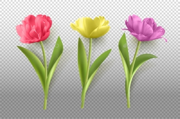 Spring Tulip Flower - Objects Illustrations