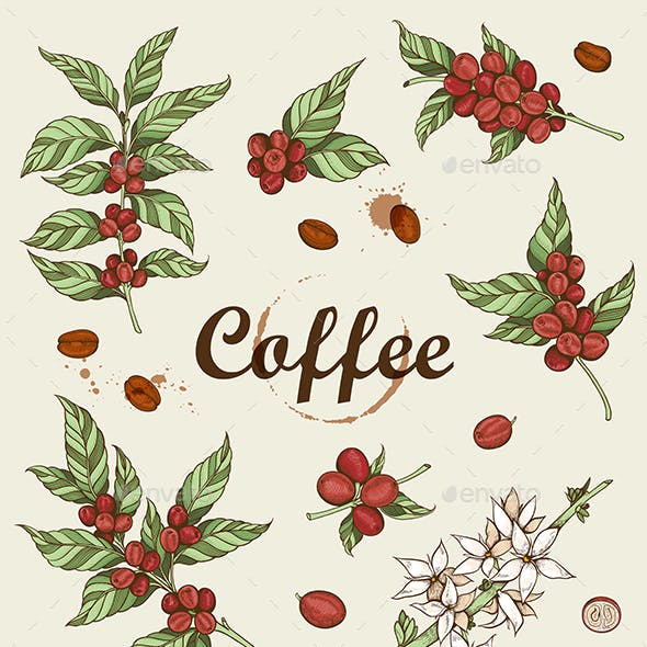 Vintage Coffee Beans and Coffee Plant