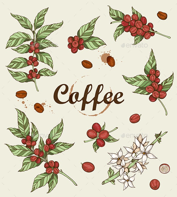 Vintage Coffee Beans and Coffee Plant - Flowers & Plants Nature