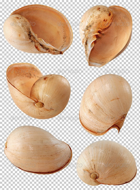 Coco Nut Shell - Nature & Animals Isolated Objects