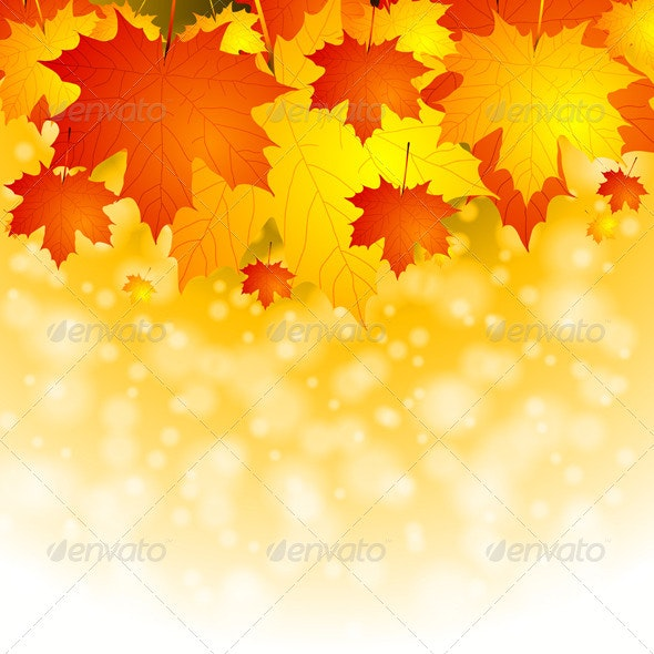 Colourful autumn background - Seasons Nature